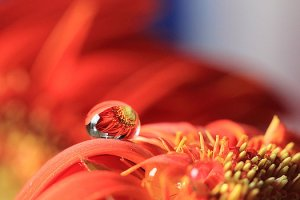 flower-reflection-in-water-drop-angela-murdock