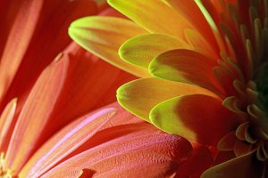 orange-and-yellow-petals-angela-murdock