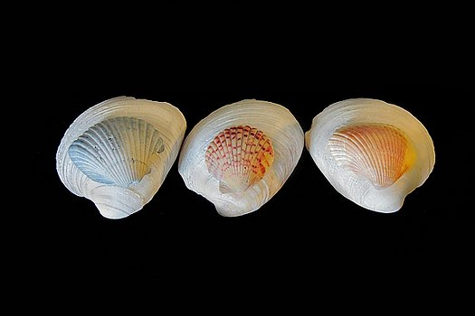 shells-on-black-background-angela-murdock