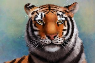 Siberian Tiger - Angela Murdock