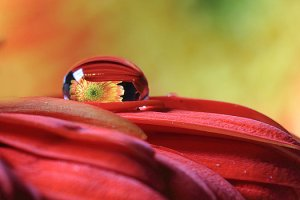 tiny-water-drop-reflections-angela-murdock