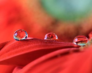 water-drop-flower-reflections-murdocks-gallery