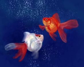 Goldfish digital painting by Angela Murdock