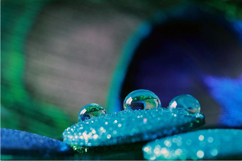 Peacock Water Drops and Glitter - Abstract Photography Print by Angela Murdock