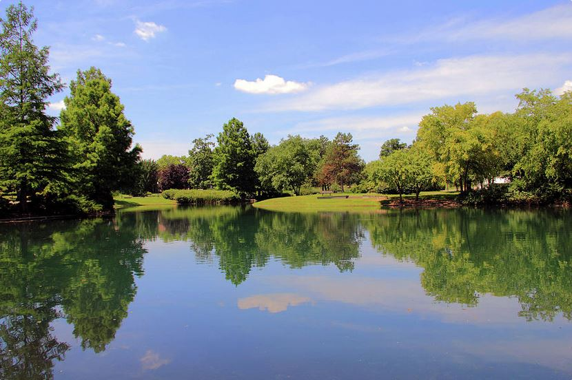 Reflections in a Pond fine art photograph by Angela Murdock
