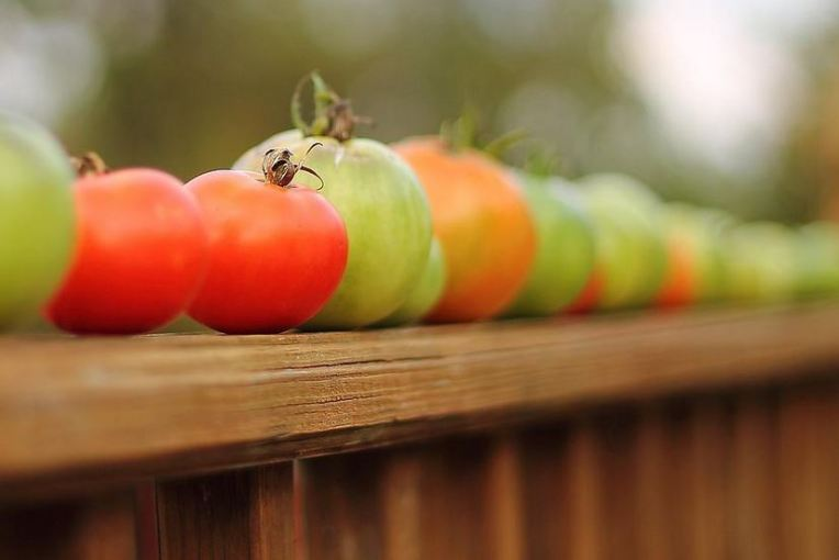 tomatoes fine art print by Angela Murdock