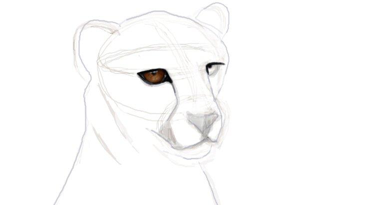 cheetah eyes_edited-1