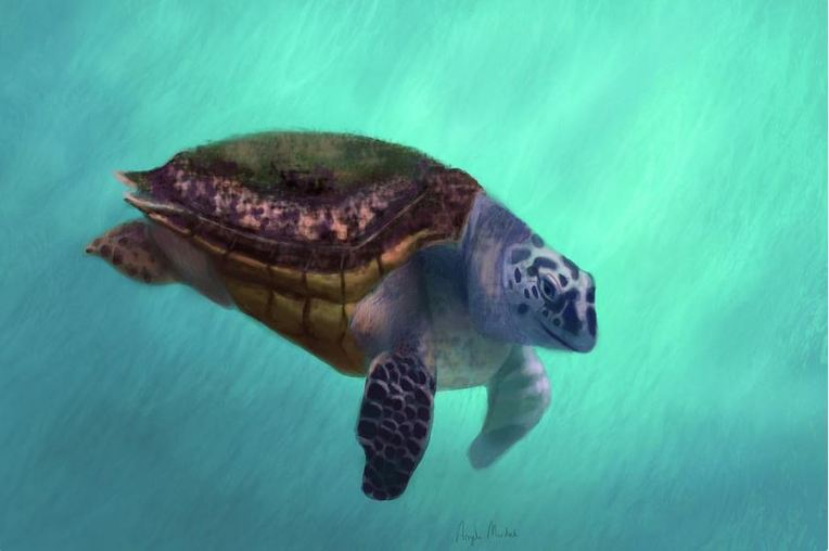 happy-turtle - artwork by Angela Murdock