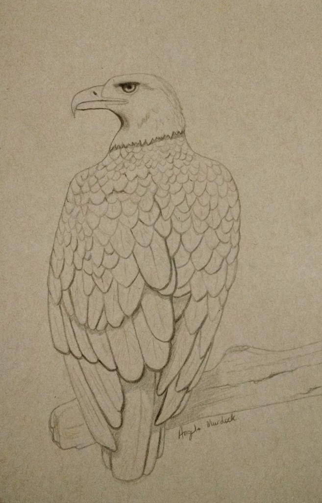 Eagle drawing by Angela Murdock