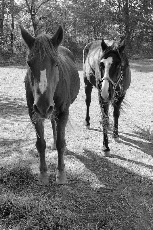 two-horses photography prints by Angela Murdock