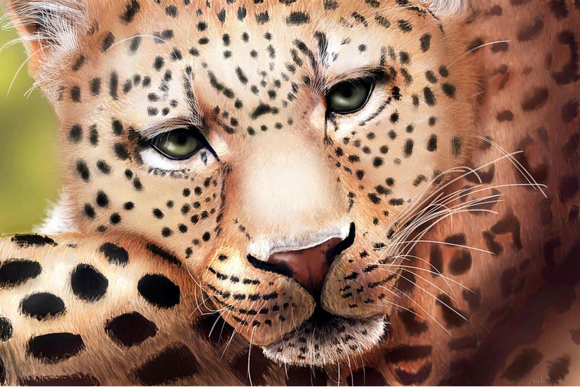 Leopard Resting: Art by Angela Murdock