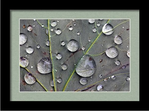 leaf macro framed Photography by Angela Murdock