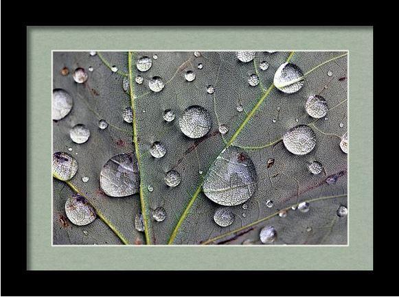leaf macro framed Photography by Angela Murdock