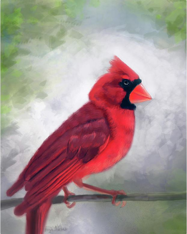 cardinal on branch artwork by Angela Murdock