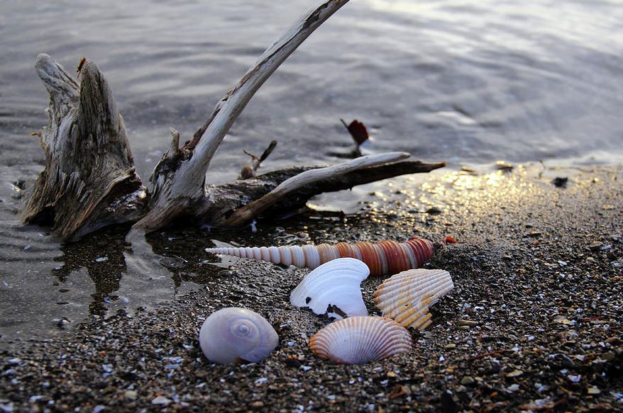 seashells and driftwood photography by Angela Murdock