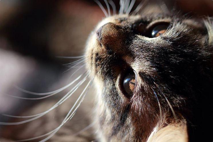 curious kitten photograph by Angela Murdock