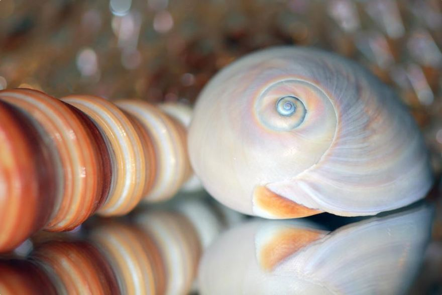 two seashells photography by Angela Murdock