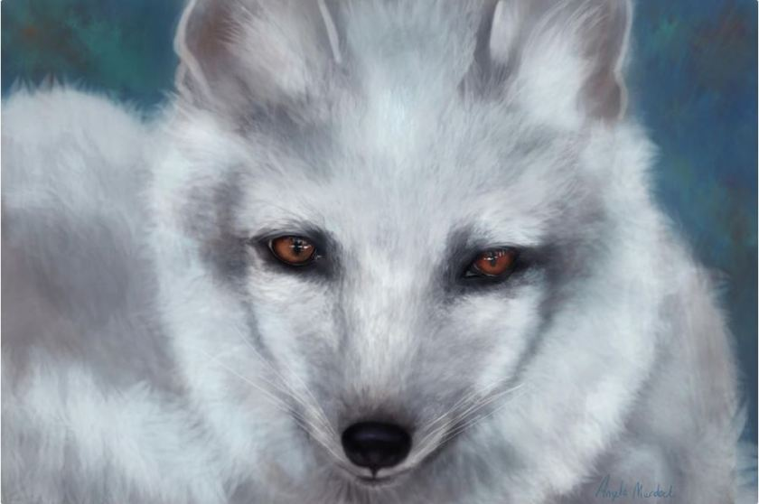 Arctic Fox Portrait: Art by Angela Murdock