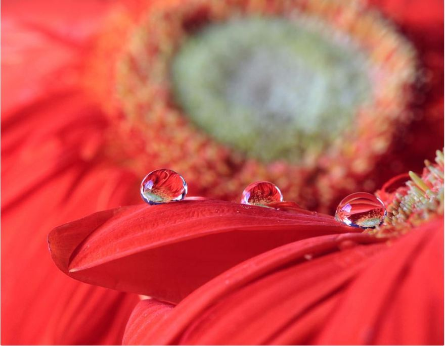 Flower Reflections: Photography Prints by Angela Murdock