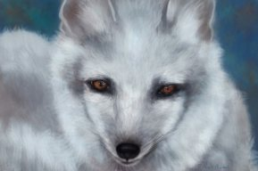 Arctic Fox: Art by Angela Murdock