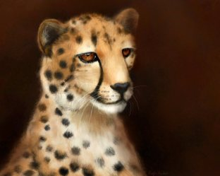 Cheetah Eyes: Art by Angela Murdock