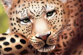 Leopard Resting art by Angela Murdock