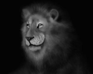 Lion Art by Angela Murdock