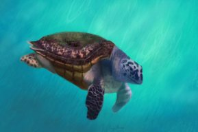 Happy Turtle art by Angela Murdock