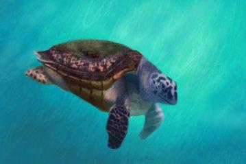 Happy Turtle art by Angela Murdock