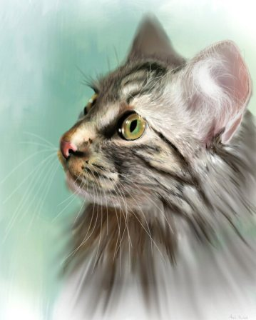 Trixie the Maine Coon Cat art by Angela Murdock