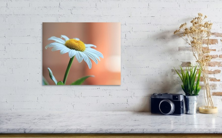 Daisy: Fine Art Photography Prints by Angela Murdock