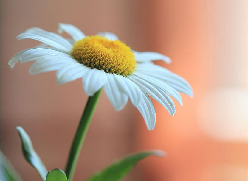 Daisy: Colorful Nature and Floral Photography by Angela Murdock