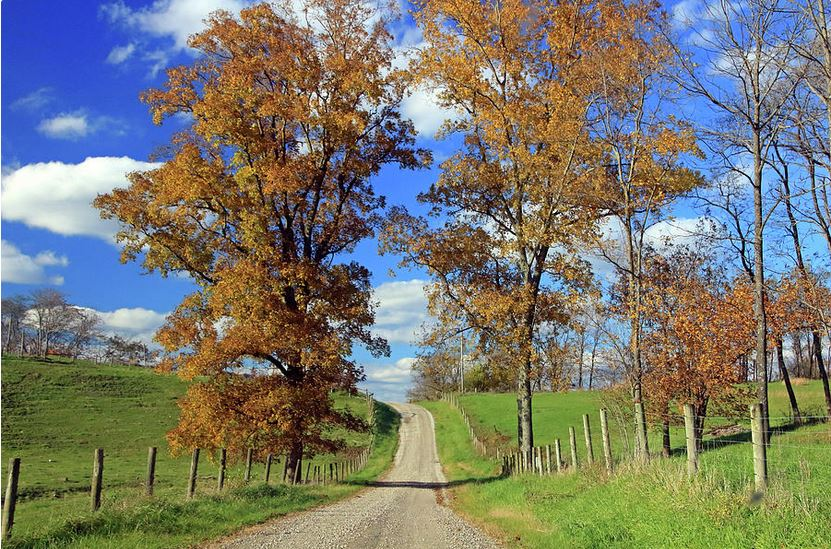 country road through fall trees