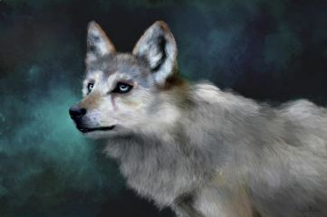 Wolf Art: Artwork by Angela Murdock