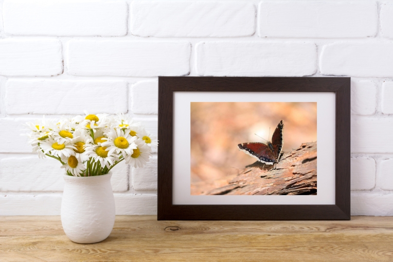 A photo display of the photograph, Mourning Cloak Butterfly, by Angela Murdock